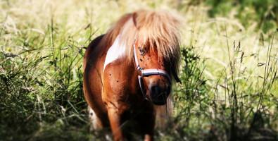 EARL Aravis équitation