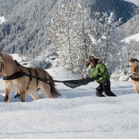 Découverte Ski-joëring Deux personnes