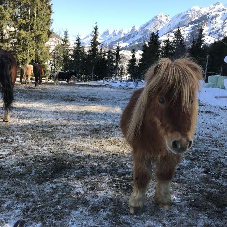 Journée de stage à cheval / poney