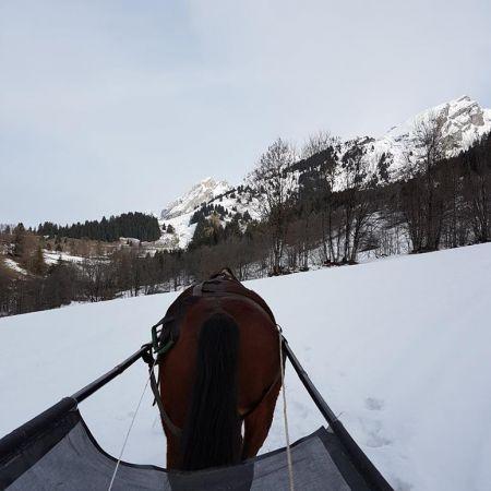 Balade Ski-Joëring semi privatisée