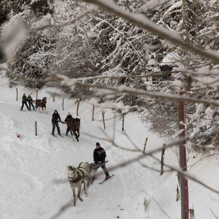 Initiation Ski-Joëring 2 personnes (30 min)