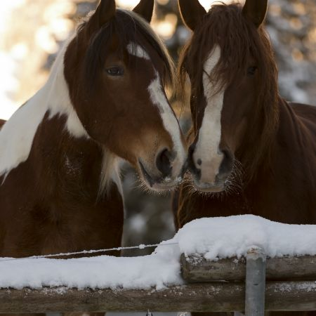 Balade à cheval sur neige