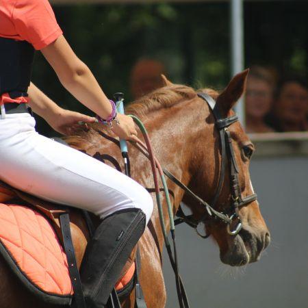 Cours collectifs - 1 h d'équitation (adhérents).