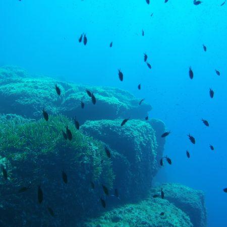 Scuba Diver Flash (3 plongées techniques + explorations)