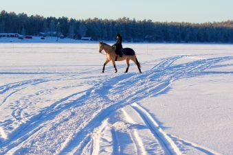 Balade à cheval sur neige image 2