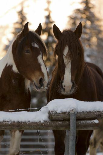 Cours particulier à cheval 1h image 1