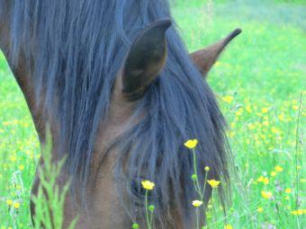 Randonnée une journée à cheval image 1