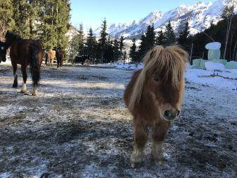 Demi-journée de stage à poney / cheval image 1