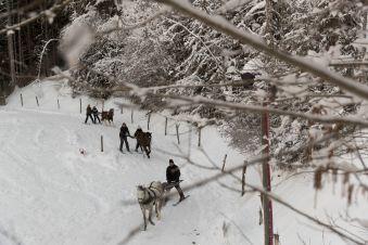 Initiation Ski-Joëring (30 min) image 1