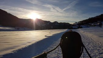 Balade Ski-Joëring (1h) image 2