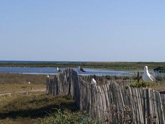 Croisières sur les Iles du Morbihan image 12