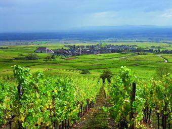 Séjour Alsace image 1