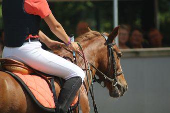 Cours collectifs - 1 h d'équitation (adhérents). image 1