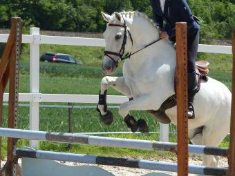 Cours particuliers - 1 h d'équitation (adhérents). image 1