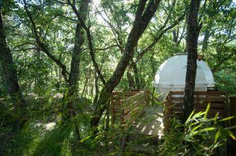 Séjour dans une bulle suspendue dans les arbres image 4