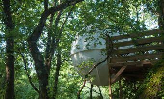 Séjour dans une bulle suspendue dans les arbres image 3
