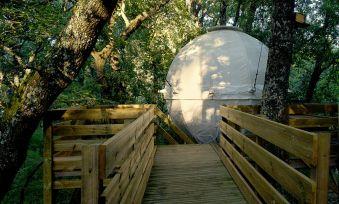 Séjour dans une bulle suspendue dans les arbres image 1