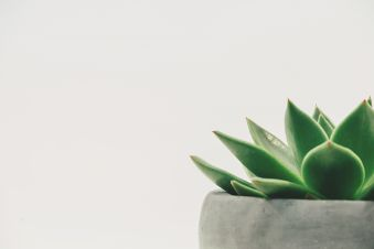 Natur'Ô Zen - Claire NACIRI cover