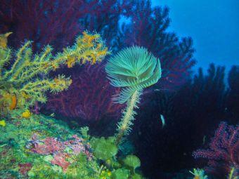 Scuba Diver Flash (3 plongées techniques + explorations) image 4