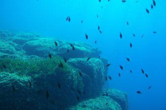 Scuba Diver Flash (3 plongées techniques + explorations) image 1