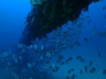 Scuba Diver Flash (3 plongées techniques + explorations) image 5