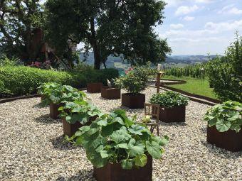 Séjour insolite en Cabane Perchée chez un paysan vigneron dans le vignoble de Château Chalon image 8