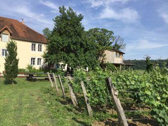 Présentation du Vignoble Jurassien et dégustation des Vins du domaine certifiés AB image 5