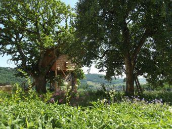 Séjour insolite en Cabane Perchée chez un paysan vigneron dans le vignoble de Château Chalon image 11