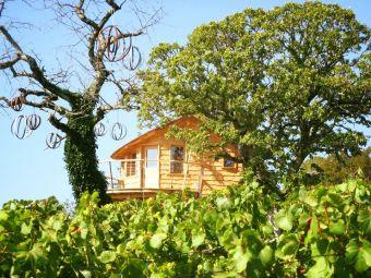 Présentation du Vignoble Jurassien et dégustation des Vins du domaine certifiés AB image 1