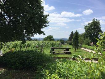 Séjour en chambre d'hôte au coeur du vignoble de Château-chalon chez un paysan vigneron image 8