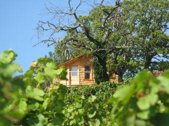 Présentation du Vignoble Jurassien et dégustation des Vins du domaine certifiés AB image 4