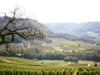 Séjour en chambre d'hôte au coeur du vignoble de Château-chalon chez un paysan vigneron image 1