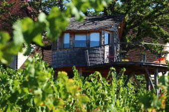 Séjour gourmand et insolite en Cabane Perchée pour 2 personnes au coeur du vignoble de Château-chalon image 5
