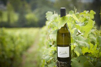 Dégustation de vin image 1