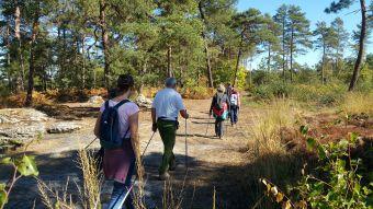 10 séances de marche nordique en forêt de Fontainebleau image 2