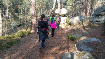 10 séances de marche nordique en forêt de Fontainebleau image 1
