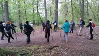 10 séances de marche nordique en forêt de Fontainebleau image 3
