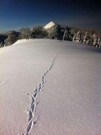 Séjour détente à la montagne image 3