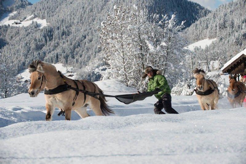 Découverte Ski-joëring Deux personnes image 2