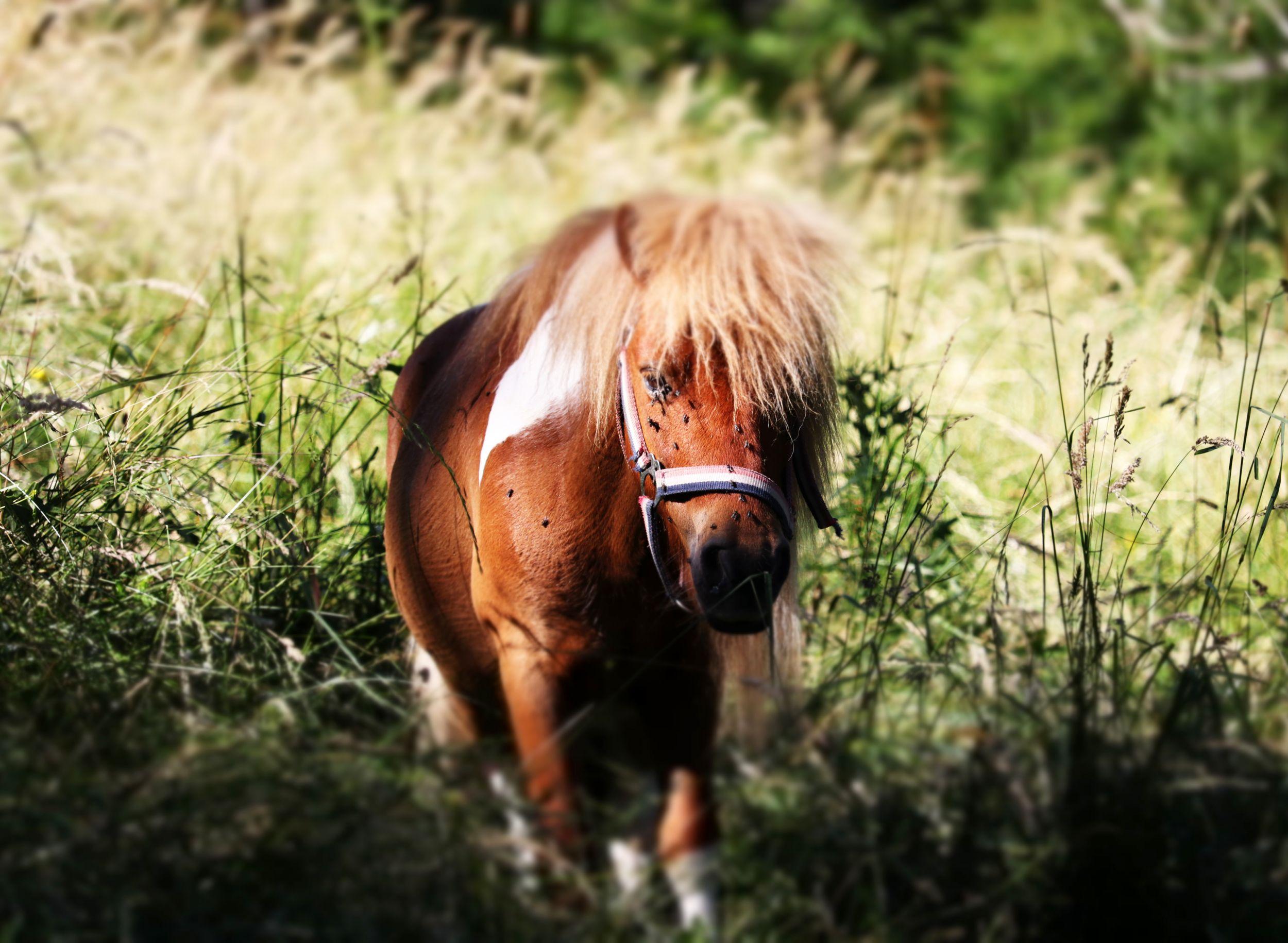 EARL Aravis équitation cover