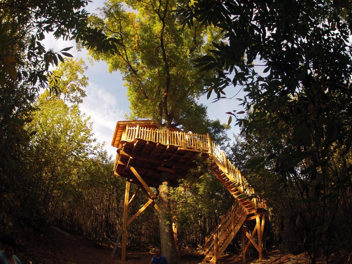 Notre sélection de 8 cabanes dans les arbres pour passer un moment inoubliable